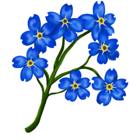 —Pngtree—forget-me-beautiful hand-painted_6195681